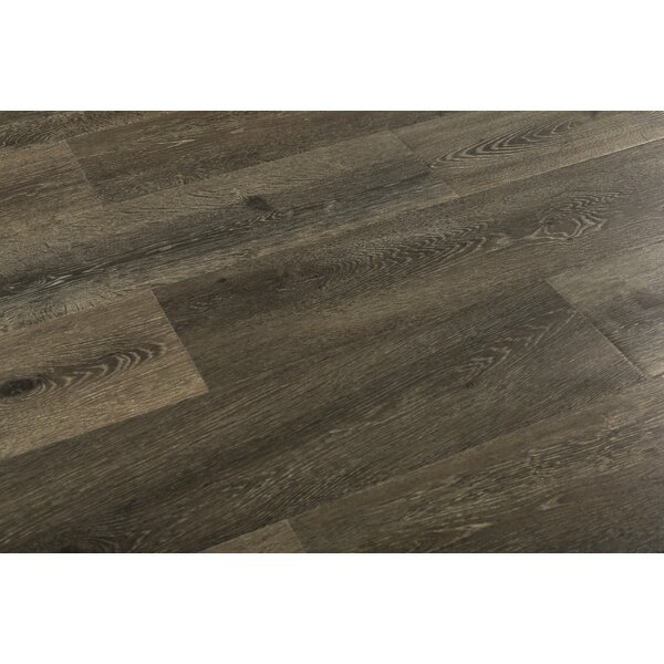 Augustus 7.71 x 72.83 x 12mm Oak Laminate Flooring in Pitch Amber by Serradon