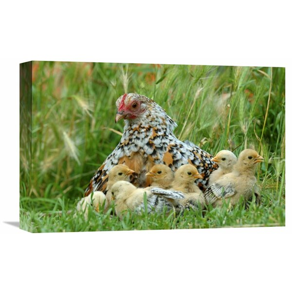 Nature Photographs Fowl With Chicks by Jan Baks Photographic Print on Wrapped Canvas by Global Gallery