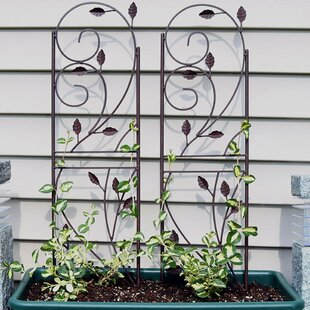 Higginsville Rustic Plant Design Steel Gothic Trellis (Set Of 2)