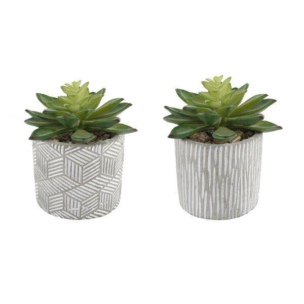 2 Piece Pattern Cement Desktop Succulent Plant in Pot Set by Bungalow Rose