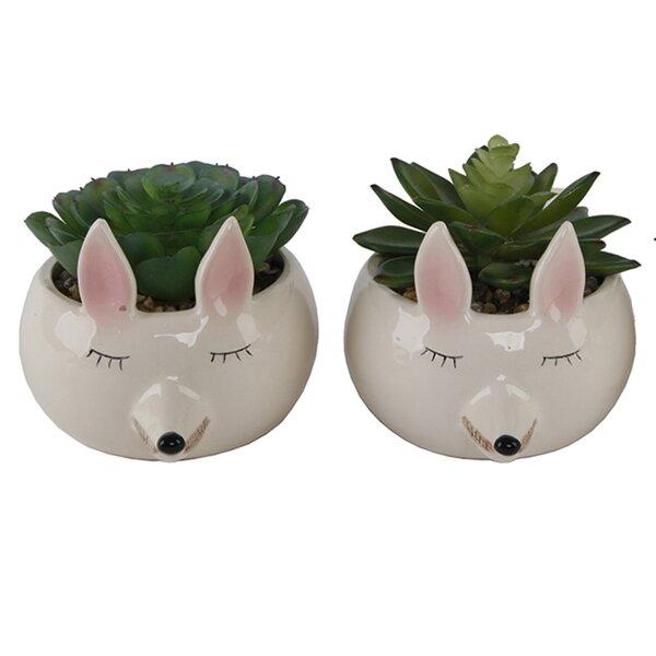 2 Piece Small Fox Succulent Desktop Plant in Pot Set by Ebern Designs