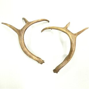Faux Taxidermy Antlers Table Décor