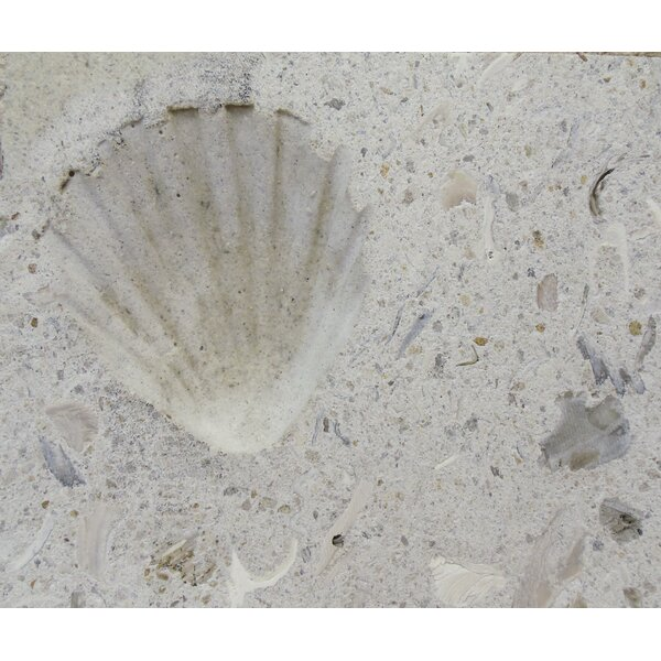 6 x 6 SeaStone Decoartive Accent Tile in White by Matrix-Z