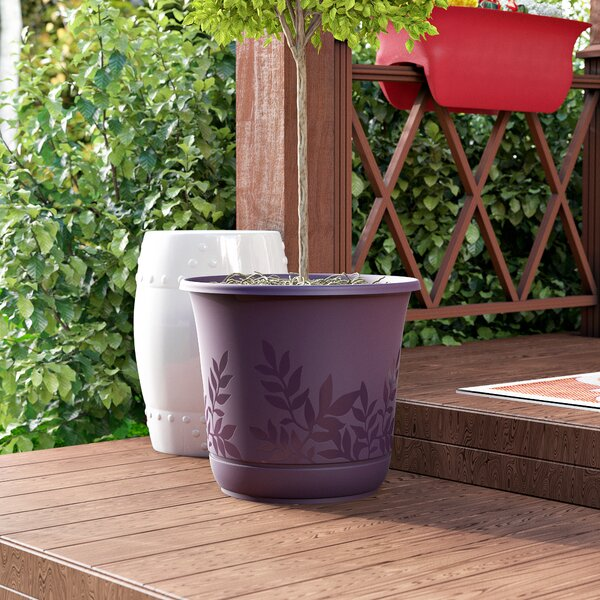 Feliz Plastic Pot Planter with Saucer by Charlton Home