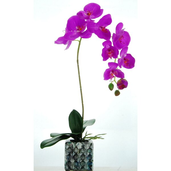 Orchid Floral Arrangement in Ceramic Pot by House of Hampton