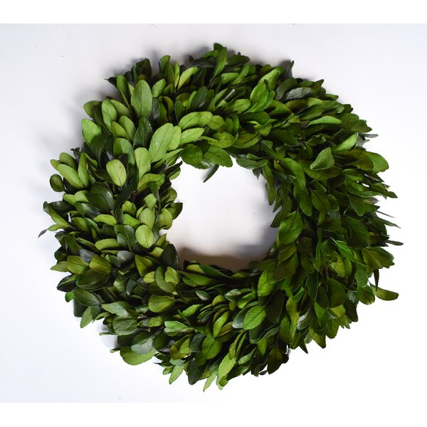 Preserved Laurel Wreath by Gracie Oaks