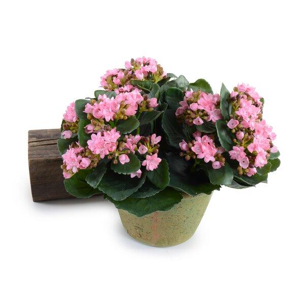 Daisies Floral Arrangement in Pot by Winston Porter