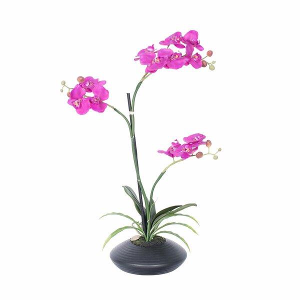 Purple Orchid Floral Arrangement in Pot by House of Hampton
