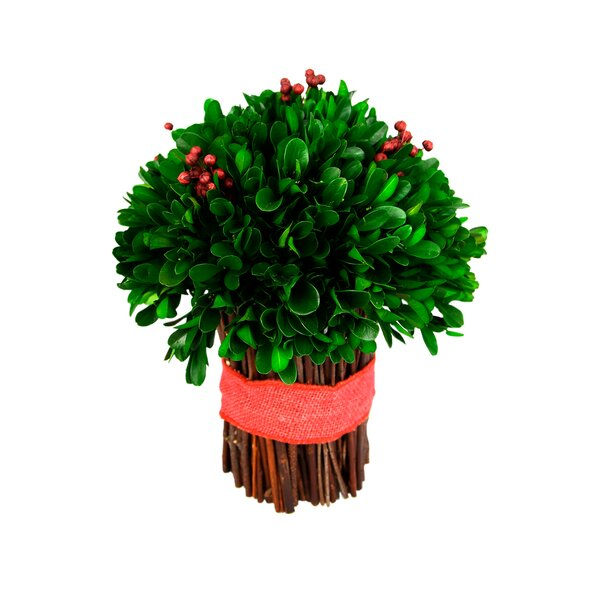Holiday Cylinder Desktop Boxwood Plant by The Holiday Aisle