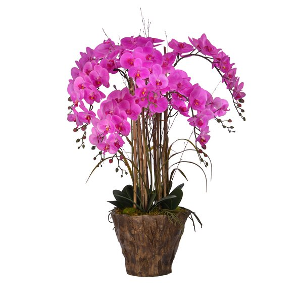 Orchids Centerpiece in Pot by Bayou Breeze