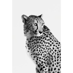 'Cheetah I' Photographic Print on Canvas in Black and White by East Urban Home