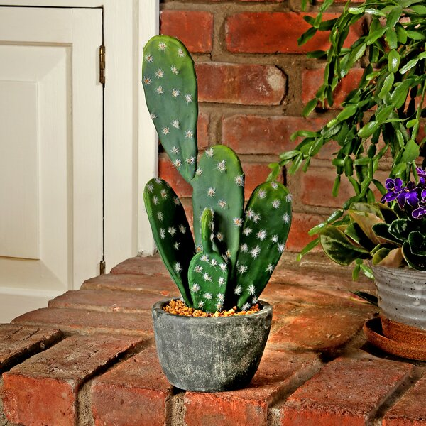 Prickly Pear Cactus Floor Foliage plant in Cement Pot by Bungalow Rose