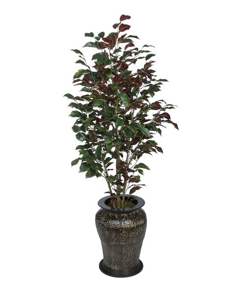 Ficus Tree in Decorative Vase by Three Posts