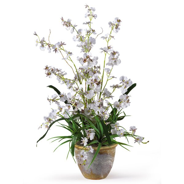 Dancing Lady Orchid Flowers in White by Nearly Natural