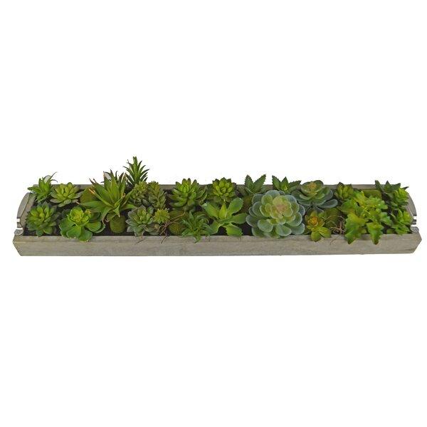Desktop Succulent Plant in Rectangular Pot by Wade Logan