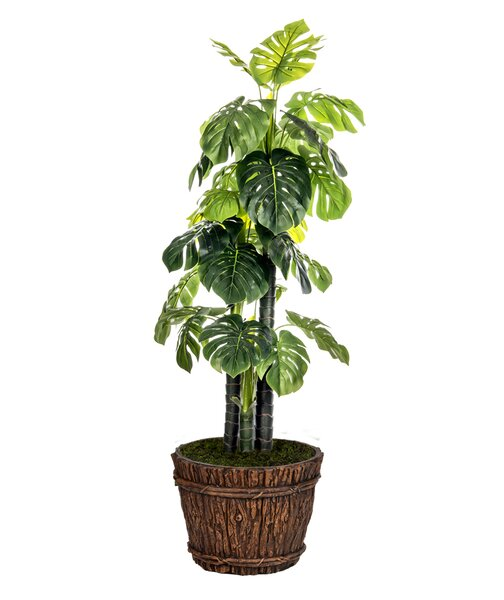 Floor Foliage Monstera Ceriman Tree in Pot by Laura Ashley Home