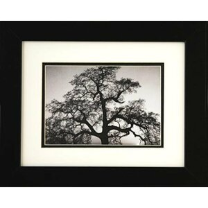 'Oak Tree and Sunset' by Ansel Adams Framed Graphic Art by Winston Porter