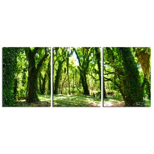 'Mystic Forest' by Chris Doherty 3 Piece Photographic Print on Wrapped Canvas Set by Ready2hangart