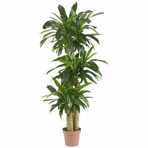 Best Indoor Floor Plants Pictures - Amazing Design Ideas - luxsee.us