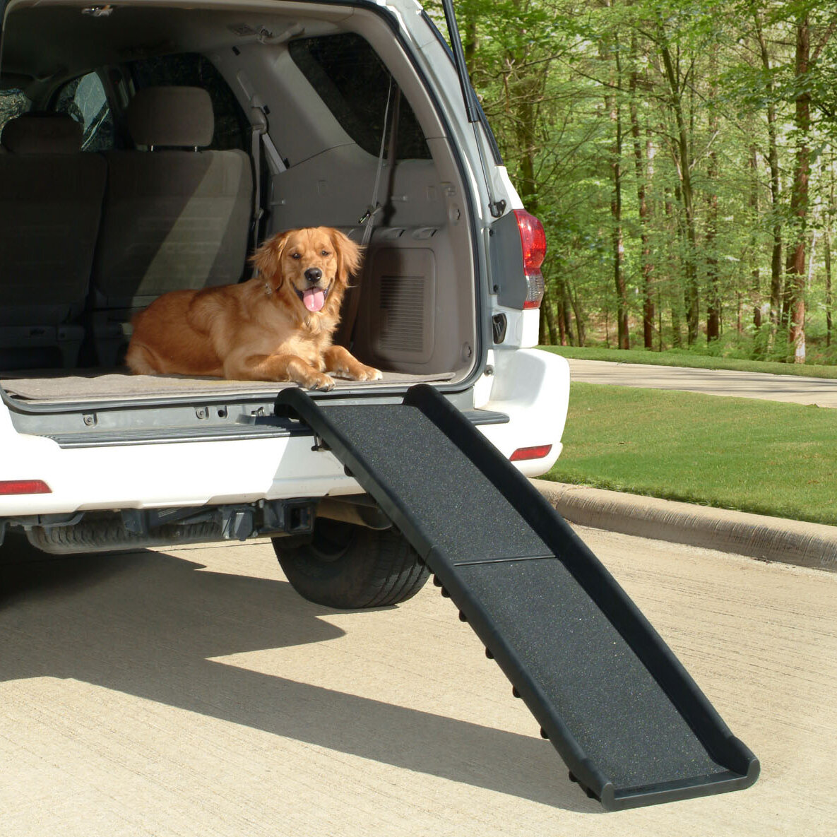 Dog Ramp For Car >> Petsafe Ultralite Bi Fold 62 Pet Ramp Reviews Wayfair