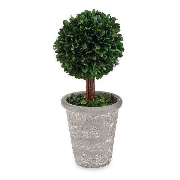 Preserved Desktop Boxwood Topiary by Mud Pie™