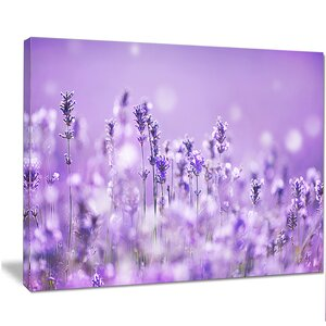 'Stunning Purple Lavender Field' Graphic Art on Wrapped Canvas by Design Art