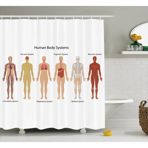 Human Anatomy Human Body With Central Nervous Network Skeleton and Neurons Image Muscle System Shower Curtain by Ambesonne