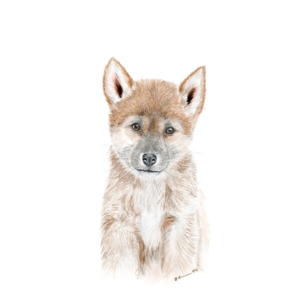 Athena Dingo Portrait Paper Print by Harriet Bee