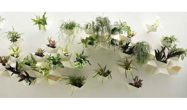 VPlant Plastic Wall Planter (Set of 6) by Modular Living