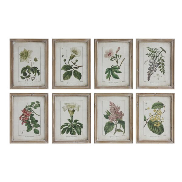 Framed Flower Illustrations by Birch Lane™