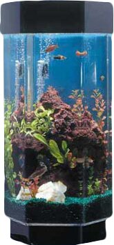 Alan 15 Gallon Scape Hexagon Alanrium Kit by Tucker Murphy Pet