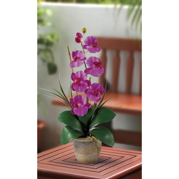 Silk Orchid with Ceramic Pot by World Menagerie