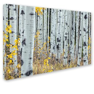 Forest of Aspens by Pierre Leclerc Photographic Print on Wrapped Canvas by Trademark Fine Art