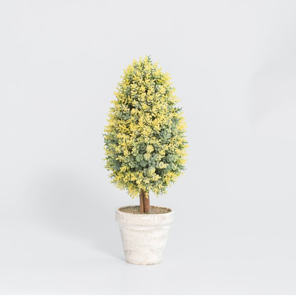 Farleigh Hungerford Cone Desktop Foliage Topiary in Pot (Set of 6) by Ophelia & Co.