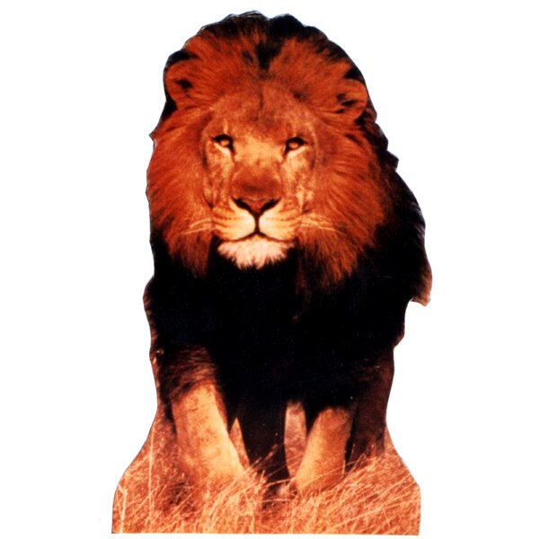 Lion Life-Size Cardboard Stand-Up by Advanced Graphics