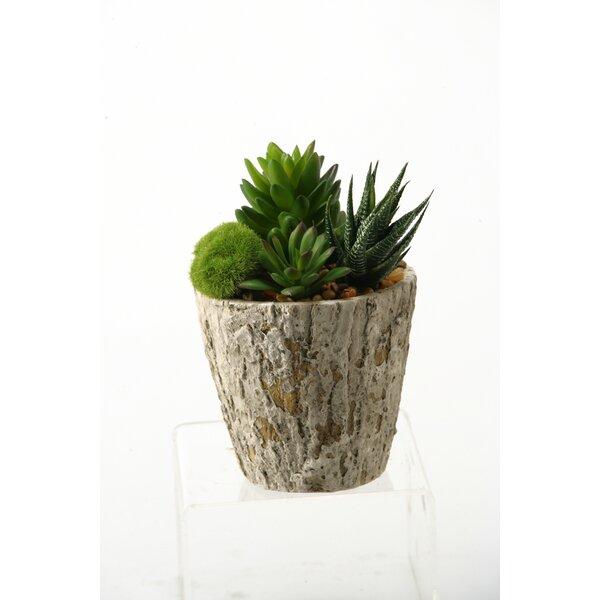 Succulents Desktop Aloe Plant in Planter by D & W Silks