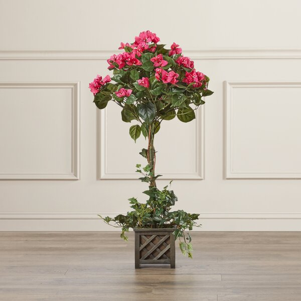 Bougainvillea Beauty Square Topiary in Basket by Darby Home Co