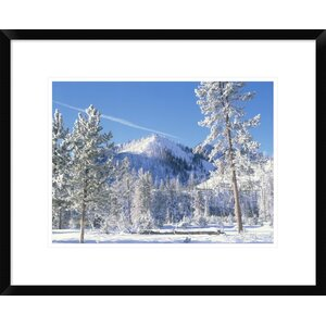 'Pine Trees Covered with Snow' Framed Photographic Print by Global Gallery