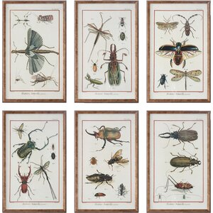 Multi Insect 6 Piece Framed Graphic Art Set by Loon Peak