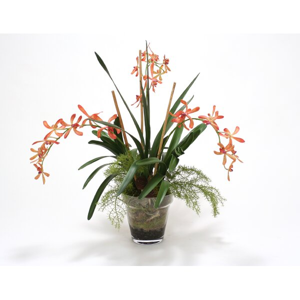 Orange Vanda Orchid with Orchid foliage in Glass Flower Pot by Distinctive Designs