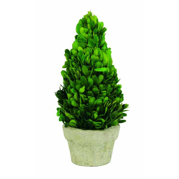 Preserved Boxwood Cone Desk Top Plant in Planter by Ophelia & Co.