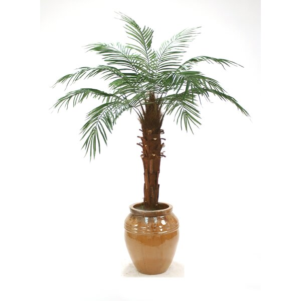 Phoenix Palm Tree in Pot by Distinctive Designs