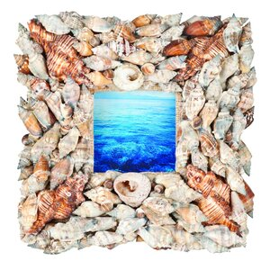 Terragraphics Beachcomber Shell Picture Frame