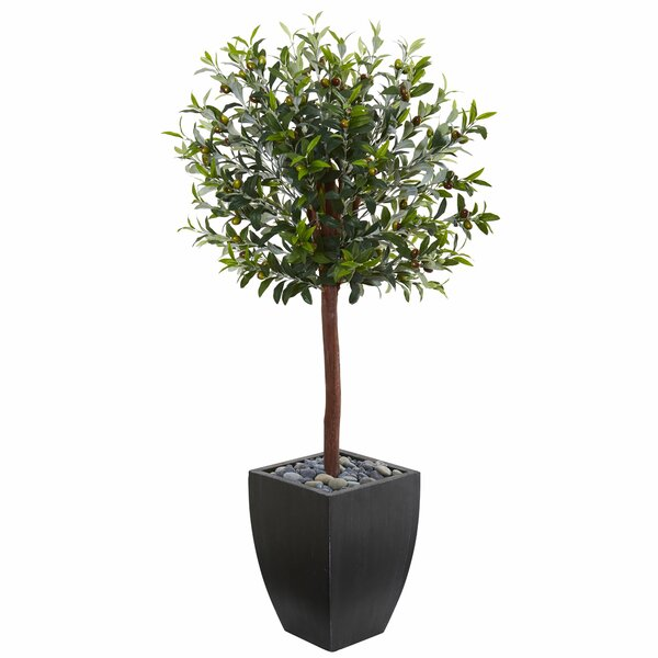 Olive Tree Topiary in Planter by Brayden Studio