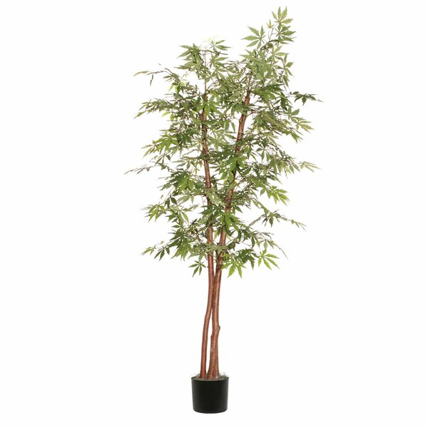 Japanese Maple Deluxe Tree in Pot by Vickerman