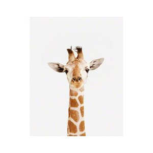 Little Darlings Baby Giraffe by Sharon Montrose Photographic Print by The Animal Print Shop by Sharon Montrose