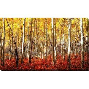 'Birch Trees' Photographic Print on Wrapped Canvas by Picture Perfect International