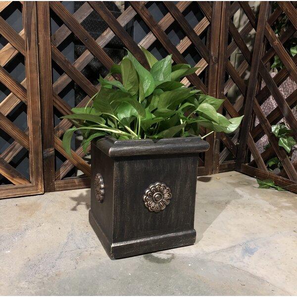 Canaan Unique Flower Pattern Square Concrete Pot Planter by August Grove