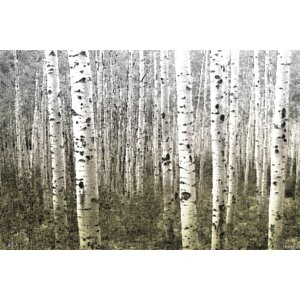 'Aspen Highlands' by Parvez Taj Painting Print on Wrapped Canvas by Mercury Row