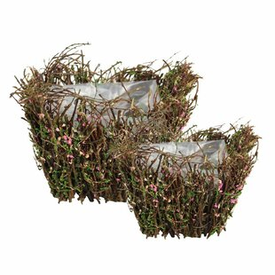 Savings 2 Piece Basket with Moss Set By ESSENTIAL DÉCOR & BEYOND, INC